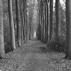 zwart en wit paard in het bos by Micky McGuinness