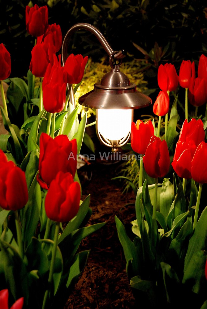 Through the tulip patch by Anna Williams