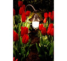 Through the tulip patch Photographic Print