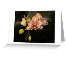 Orchid flower hnk33 photography Greeting Card