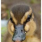 Dinky Duck i Cover NZ by AndreaEL