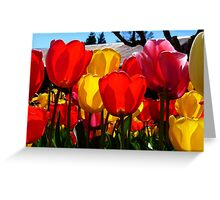 Natures Cups Are Always Full...Tulips - NZ Greeting Card