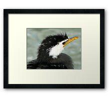 Who Said Eel? - Pied Cormorant - NZ Framed Print