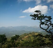 Thekkady Tree by Brent Olson