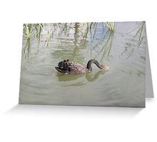 Black Swan drinking Greeting Card