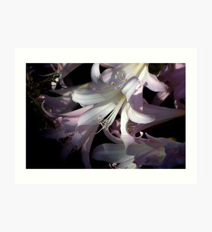 precious flower  Art Print