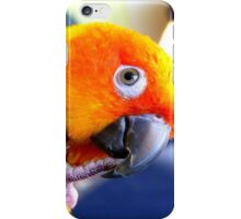 Sunshine.. Sun Conure iPhone Case... NZ iPhone Case/Skin