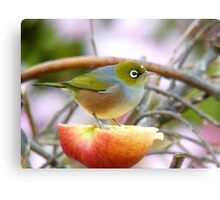 Yum... This Is An Extra Juicy Apple... - Silver-Eye - NZ Canvas Print