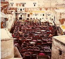 The Tannery, Fez by Alina Holgate