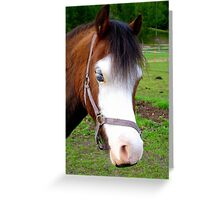 Why The Long Face? - Are You Feeling Blue? - Pinto - NZ Greeting Card