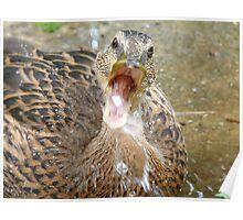 Hey Look!!! I Can Catch Water... Mallard Duckling - NZ Poster