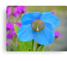 Dreams Of The Blue Poppy - Himalayan Blue Poppy - NZ Canvas Print