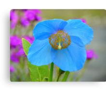 Dreams Of The Blue Poppy - Himalayan Blue Poppy - NZ Canvas Print