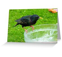 Hey!!!.. Who Ate All The Trifle? - Starling - NZ Greeting Card
