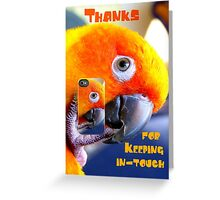 Thanks For Keeping In-Touch - Sun Conure - NZ Greeting Card