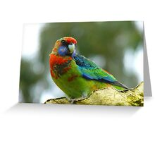 I'm Getting Rid Of My Baby Clothes! - Rosella - NZ Greeting Card