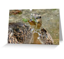 Rain Drops Keep Falling On My Head ♫♫ - Duckling - NZ Greeting Card