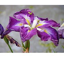 Floral Rainbow - Iris - NZ Photographic Print