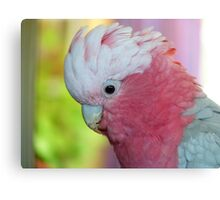 I'm In The Pink - Galah - NZ Canvas Print