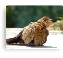 If I Sunbathe Long Enough I'll Turn Into A Blackbird - NZ Canvas Print