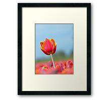 Eternal Life... - Tulip - NZ Framed Print