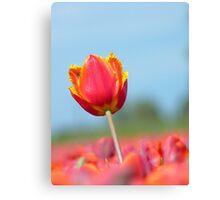 Eternal Life... - Tulip - NZ Canvas Print