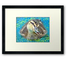 Oh Come On In... Join Me!!! - Mallard Duckling - NZ Framed Print