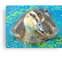 Oh Come On In... Join Me!!! - Mallard Duckling - NZ Canvas Print