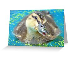 Oh Come On In... Join Me!!! - Mallard Duckling - NZ Greeting Card