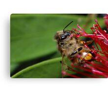 Bee. Canvas Print