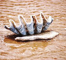 WASHED OUT... EVERY CLAM TELLS A STORY.. by Magriet Meintjes