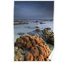 Reef Tide Poster