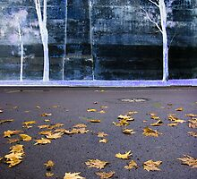 Fall Wall  by Harry Neelam