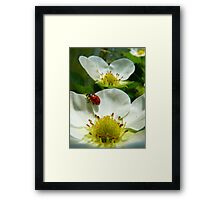 The Strawberry Lady... - Ladybird On Strawberry Flower - NZ Framed Print