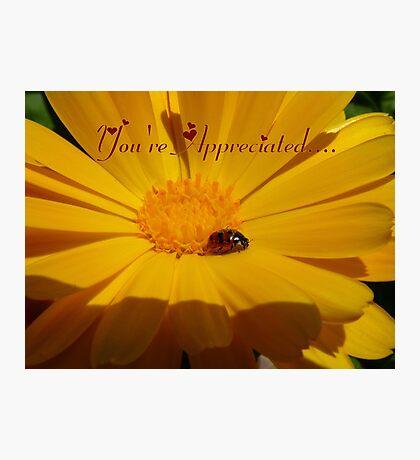 You're Appreciated - Ladybird - NZ Photographic Print