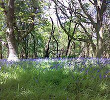 Bluebells in Spring by lpleeds5
