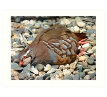 """Did You Not See The """"Do NOT Disturb Sign?""""!! - Partridge - NZ Art Print"""