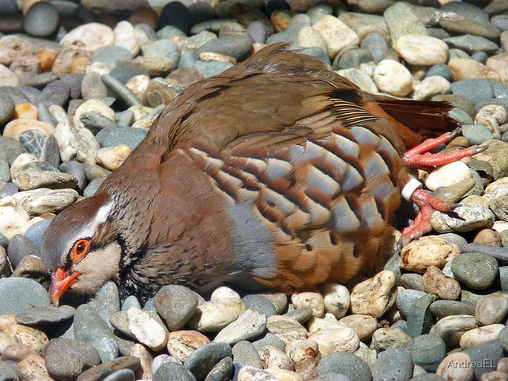 """Did You Not See The """"Do NOT Disturb Sign?""""!! - Partridge - NZ by AndreaEL"""