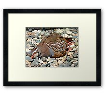 """Did You Not See The """"Do NOT Disturb Sign?""""!! - Partridge - NZ Framed Print"""