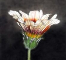 Wild Petal Dreams by Lesley Smitheringale