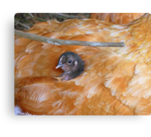 I Love Grandma's Feather Bed!!! - Chick - NZ Canvas Print