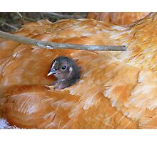 I Love Grandma's Feather Bed!!! - Chick - NZ Photographic Print