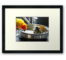 It's Not A Bird Bath... It's A Pan Bath LOL... - Conures - NZ Framed Print