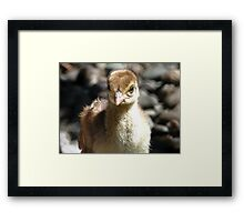 I'm A Baby Pea... - Peafowl Chick - NZ Framed Print
