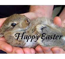 Happy Easter Bunny - NZ Photographic Print