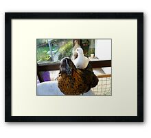 Who Said Dove's Can't Ride Side Saddle? - Dove & Chick - NZ Framed Print