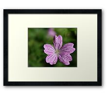 Donegal Flower Framed Print