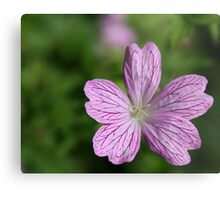 Donegal Flower Metal Print