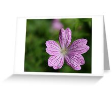 Donegal Flower Greeting Card