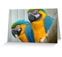 She Looks Pretty Serious... Are We Supposed To Smile... - Blue & Gold Mac-caw - NZ Greeting Card